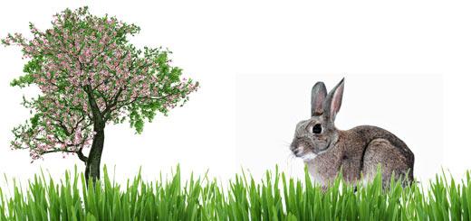 diferencia entre fotosíntesis y respiración