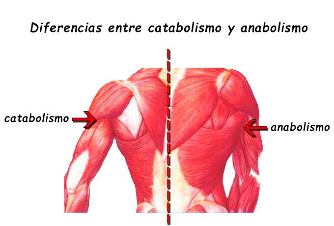 A anabolismo e catabolismo - Trabalhos Acadêmicos Serviço..