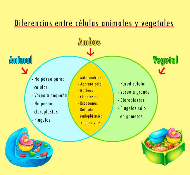 diferencias entre célula vegetal y animal