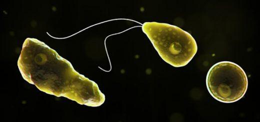 ejemplos organismos heterótrofos