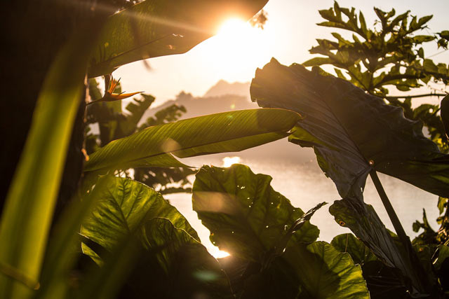 proceso fotosíntesis luz solar