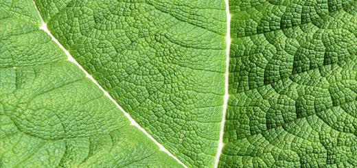 proceso fotosíntesis
