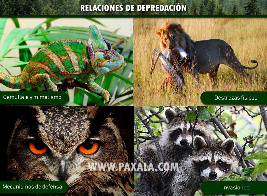 Relaciones de depredación