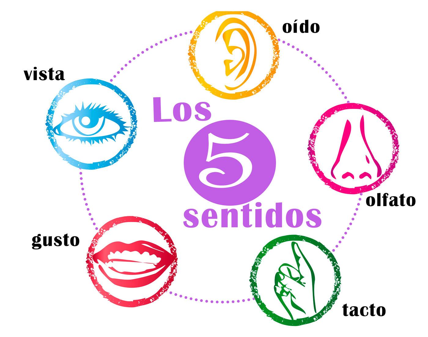 Los 5 sentidos del cuerpo humano funciones for El divan de los sentidos