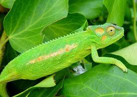 animales insectivoros