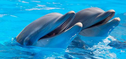 de qué se alimentan los delfines