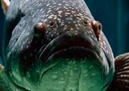 ¿Cómo y por dónde respiran los peces?