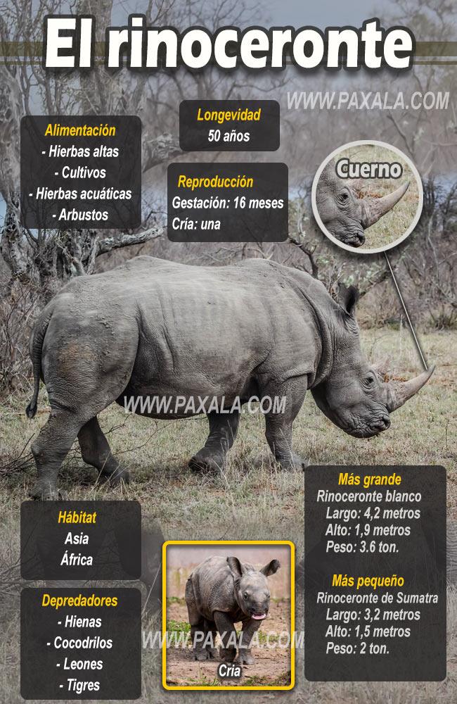 infografía del rinoceronte