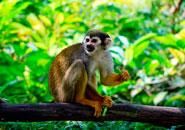 ¿Qué comen los monos?